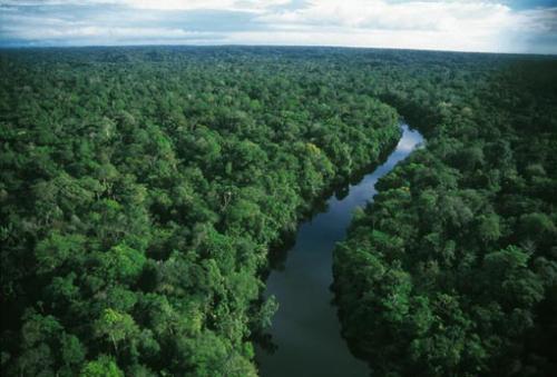 صور - معلومات عن غابات الامازون بالصور والفيديو