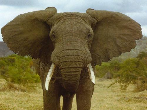 38 5 or 1388760959 أروع صور الفيل    Finest images of the elephant