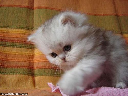 صور - اجمل صور القطط الجميلة