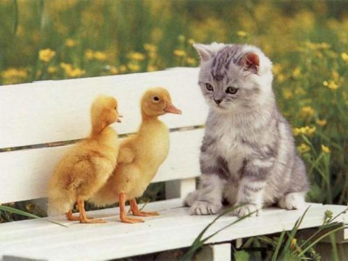 صور - صور قطط مضحكة رائعة