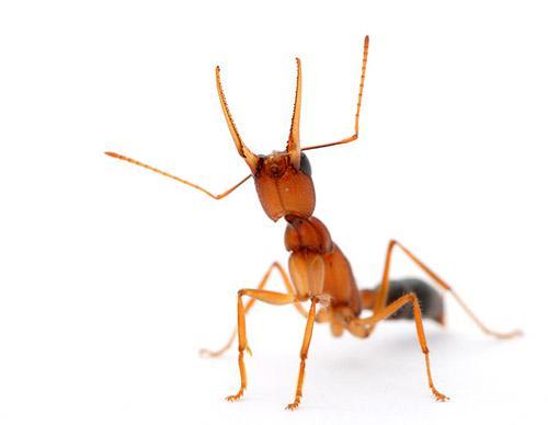 صور - بحث عن النمل بالصور