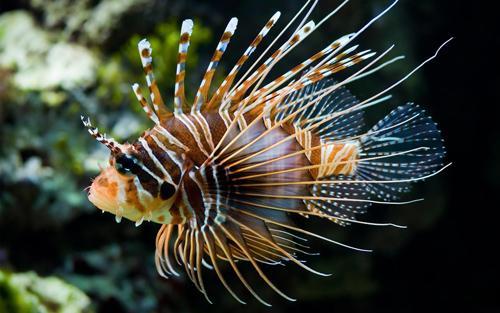 صور - اجمل صور سمك ملون