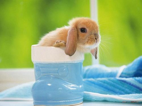 المحبي الأرنب مجموعه صور حلوة لاتفوتكم coobra.net