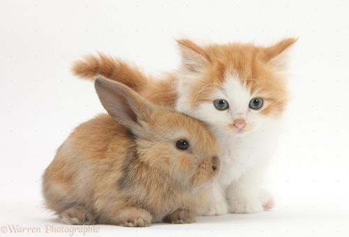 اجمل صور ارانب صغيرة وجميلة