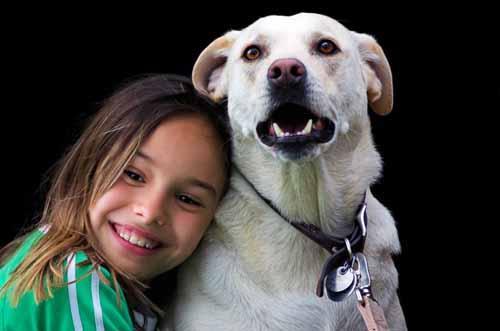 معلومات عن الكلاب بالصور