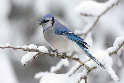 اجمل صور عصافير صغيرة