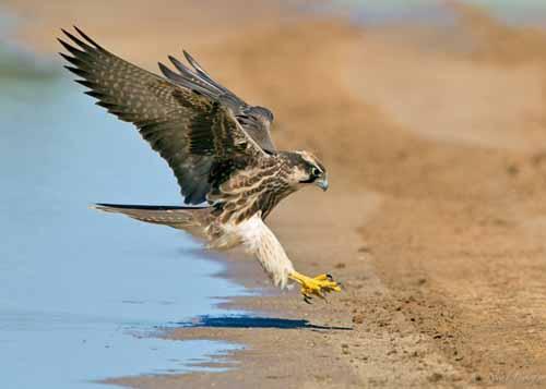 أغرب الطيور الجارحة وسلوكياتها المثيرة للدهشة تسعة اولاد