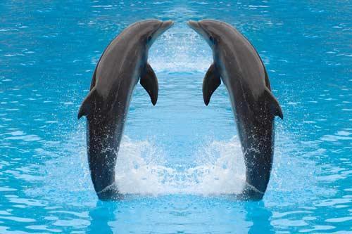 صور - معلومات عن الدولفين بالصور
