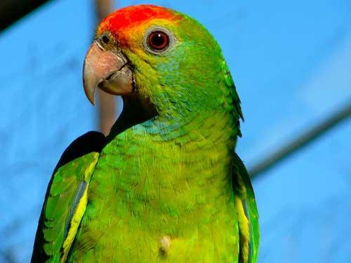 صور - معلومات عن طيور الببغاء بالصور والفيديو