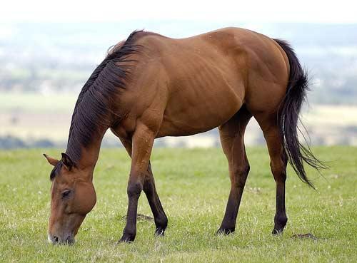 صور - معلومات عن الحصان بالصور