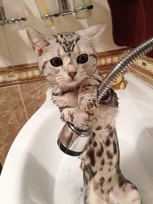 صور - صور حيوانات مضحكة اثناء الاستحمام