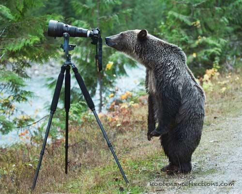 صور - صور حيوانات طريفة ومضحكة مع مصوري البرية