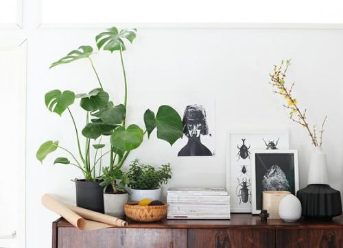 صور - كيف تحافظ على نباتات الزينة على قيد الحياه فى منزلك ؟