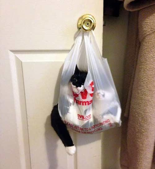 صور - صور قطط منزلية مضحكة جدا