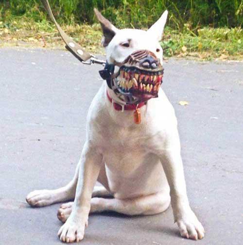 صور - غرائب وطرائف - كمامات كلاب تحول الكلب الى ذئب