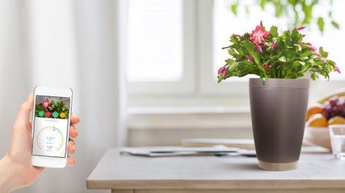 صور - عجائب وغرائب العالم - وعاء سحري يحافظ علي بقاء النباتات علي قيد الحياة