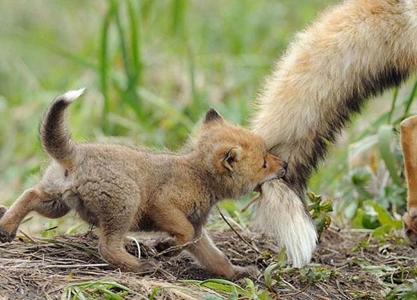 صور - اجمل صور حيوانات كيوت