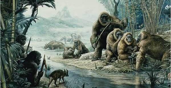 ما هى اسباب انقراض القرود الضخمة ؟
