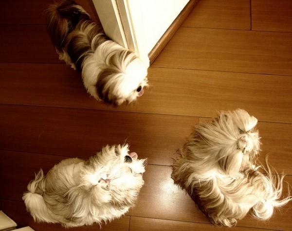 صور - ما هى اسباب و اعراض حساسية الكلاب و طرق الوقاية منها ؟