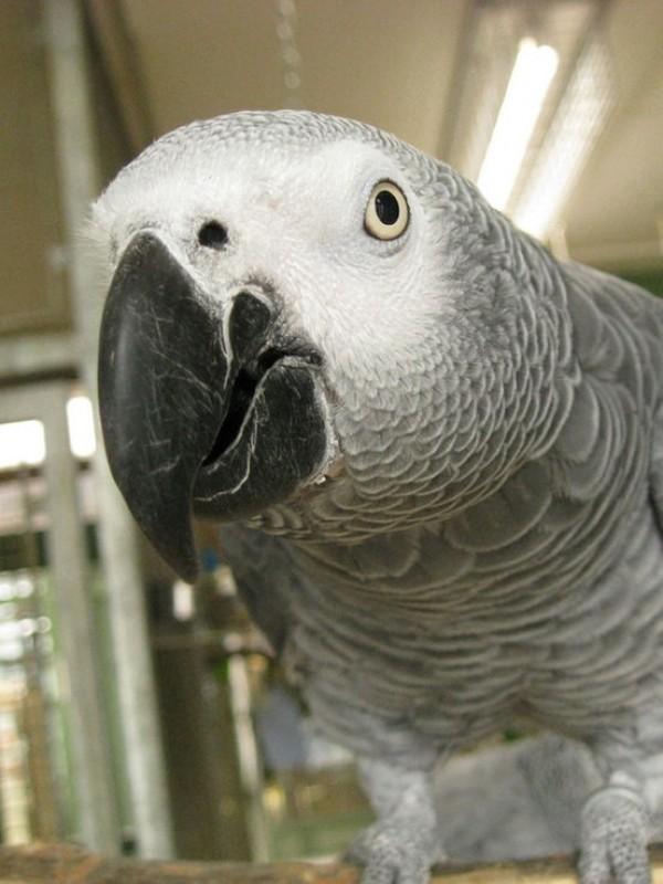 10 معلومات غريبة عن الحيوانات بالصور
