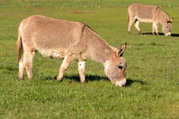 اغرب 10 حيوانات اليفة فى العالم بالصور ماجيك بوكس