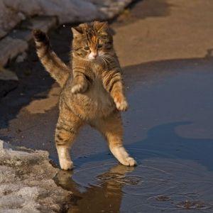 ما اسباب بعض تصرفات القطط الغريبة ؟