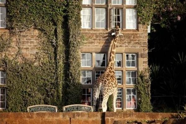 صور - 10 من اجمل و اشهر الفنادق العالمية بالصور