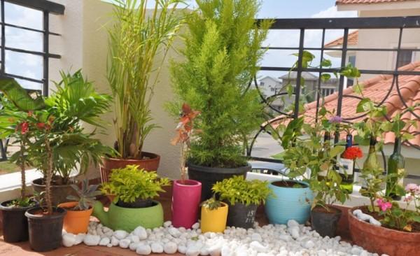 صور - نصائح للحصول على حدائق منزلية داخلية جذابة