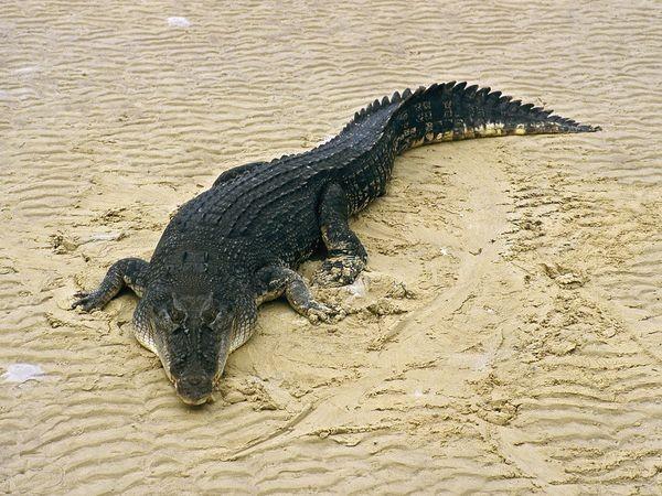 صور - اخطر 10 حيوانات مفترسة على وجه الارض بالصور