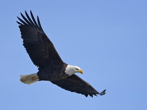 صور - معلومات عن النسر اكبر الطيور الجارحة في العالم