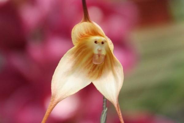 صور - 10 من اجمل و اغرب الزهور فى العالم بالصور