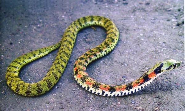 صور - اكثر 10 ثعابين سامة فى العالم بالصور