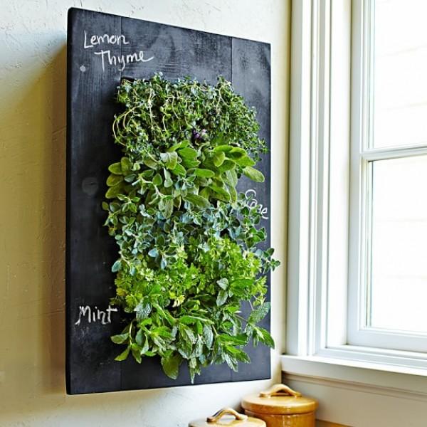 صور - نصائح مفيدة عن تسريع نمو النبات داخل منزلك