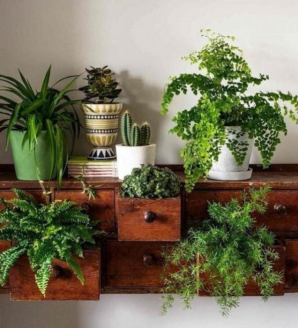 صور - نصائح عن تخصيب التربة للنباتات المنزلية