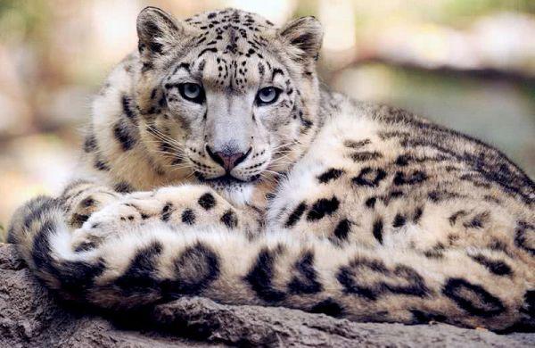 صور - اجمل 10 حيوانات مهددة بالانقراض في العالم بالصور