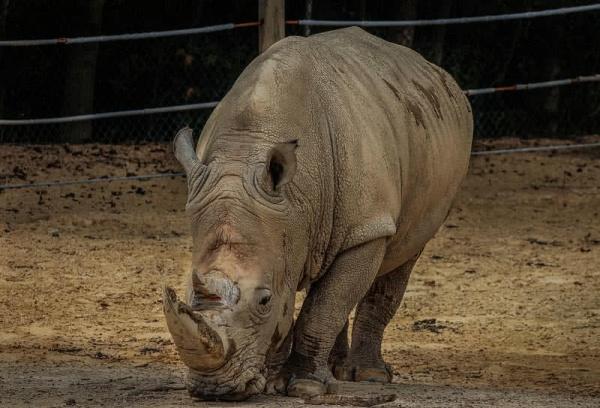 صور - 10 من اضخم الحيوانات في العالم بالصور