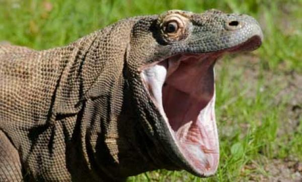 صور - 10من أشهر الحيوانات المفترسة بالصور
