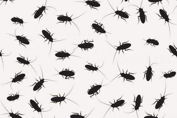 كيفية القضاء على الصراصير نهائيا بمواد غير سامة ؟