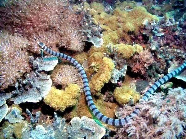من اخطر الثعابين السامة ثعبان البحر