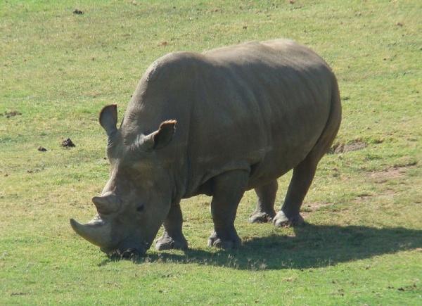 موطن وحيد القرن الابيض