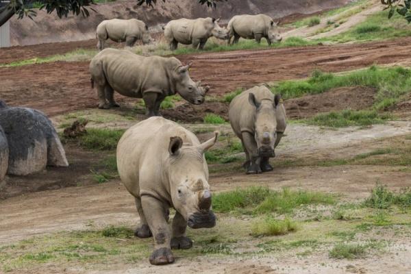 انواع وحيد القرن الابيض