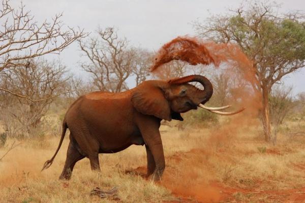 الفيلة من اكبر الاشياء في العالم