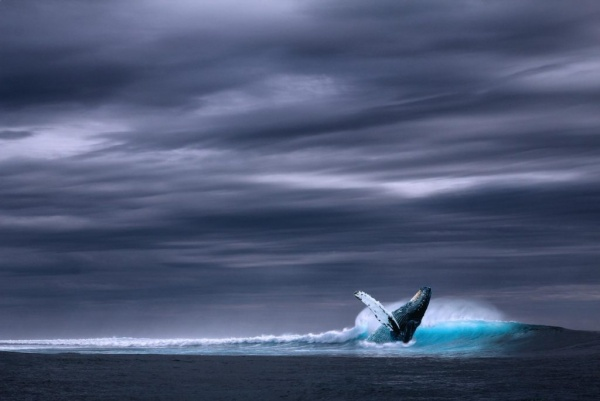 الحوت الأزرق من اكبر الاشياء في العالم