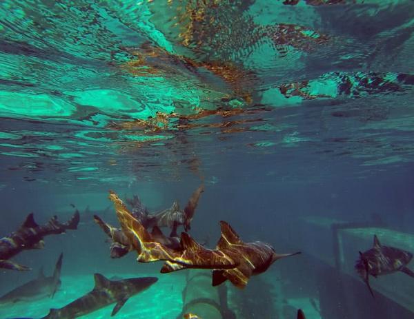 حديقة أتلانتيس من اجمل الاماكن تحت الماء
