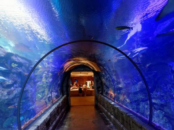 حوض أسماك القرش من اجمل الاماكن تحت الماء