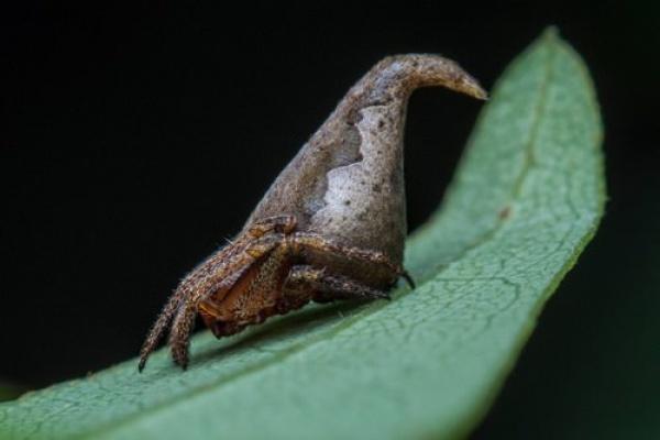 عنكبوت هاري بوتر من انواع الحيوانات المكتشفة حديثا