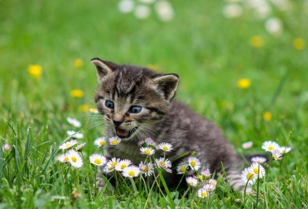 القطط من ألطف حيوانات مستأنسة
