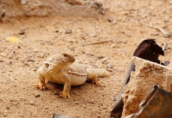 10 من اهم الحيوانات الصحراوية بالصور ماجيك بوكس
