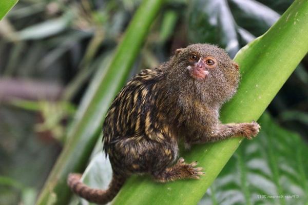 أصغر الحيوانات في العالم smallest-animals_2186_2_1527805920.jpg