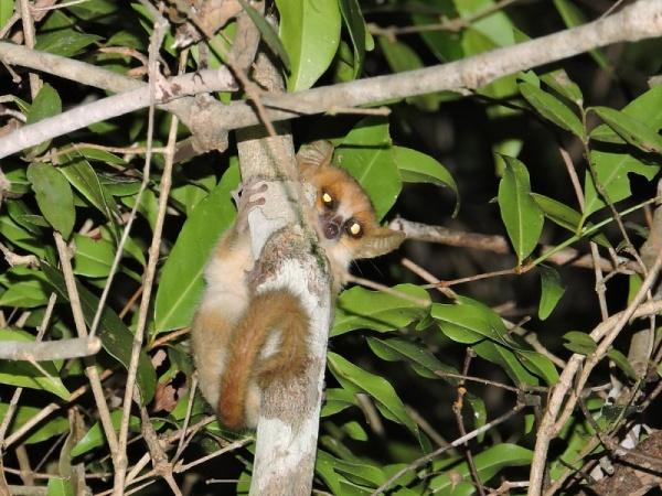أصغر الحيوانات في العالم smallest-animals_2186_3_1527805922.jpg